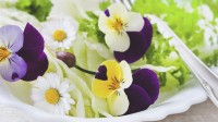 La cuisine des fleurs comestibles