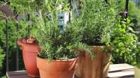 Cultivez vos plantes aromatiques chez vous